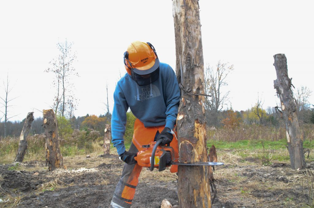 A student in safety gear uses a chain saw to cut a tree